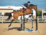 NorthcoteSat17thSept'16 SeniorBSJumping All_Classes AvailableUntil17thOct'16